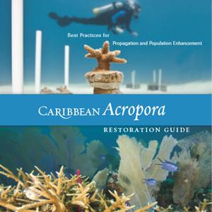 Caribbean Acropora Restoration Guide