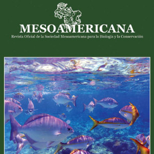 Mesoamericana Document