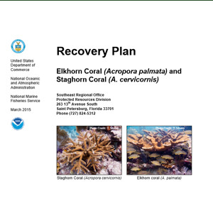 Final Acropora Recovery Plan